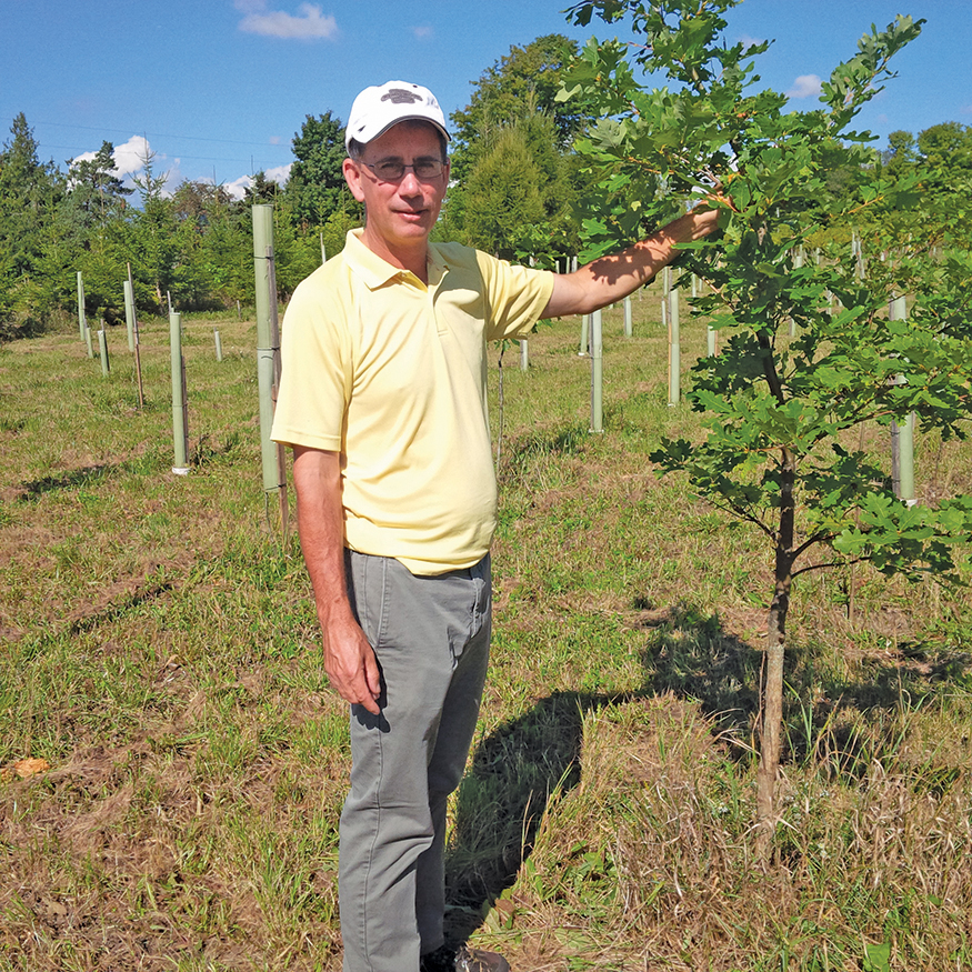 Photo of a man standing next to a young oak tree at an assisted migration trial site