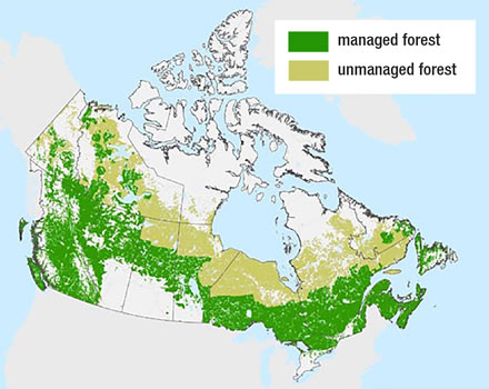 A map showing the areas of managed forest and unmanaged forest in Canada and provincial and territorial boundaries.