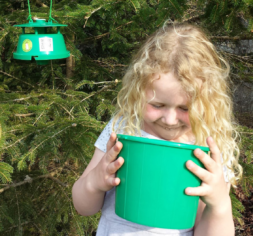 Photo of a girl looking into a Budworm Tracker pheromone trap for moths.