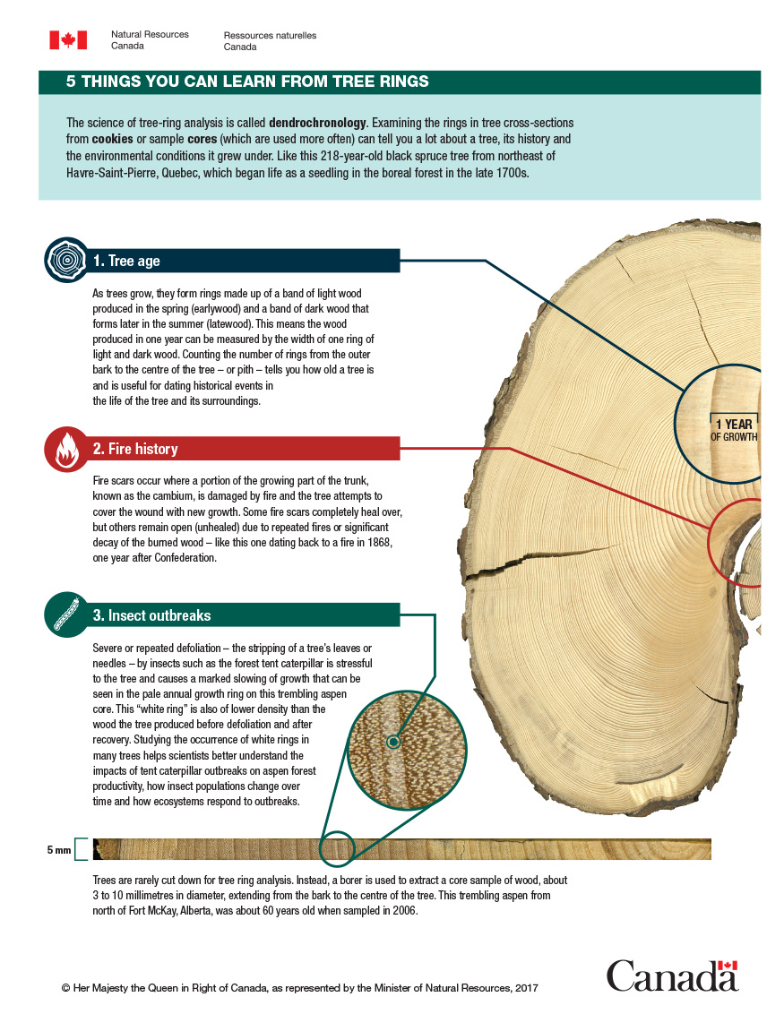 Infographic: 5 things you can learn from tree rings