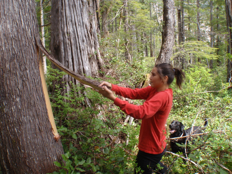 Young woman stripping bark from a cedar tree