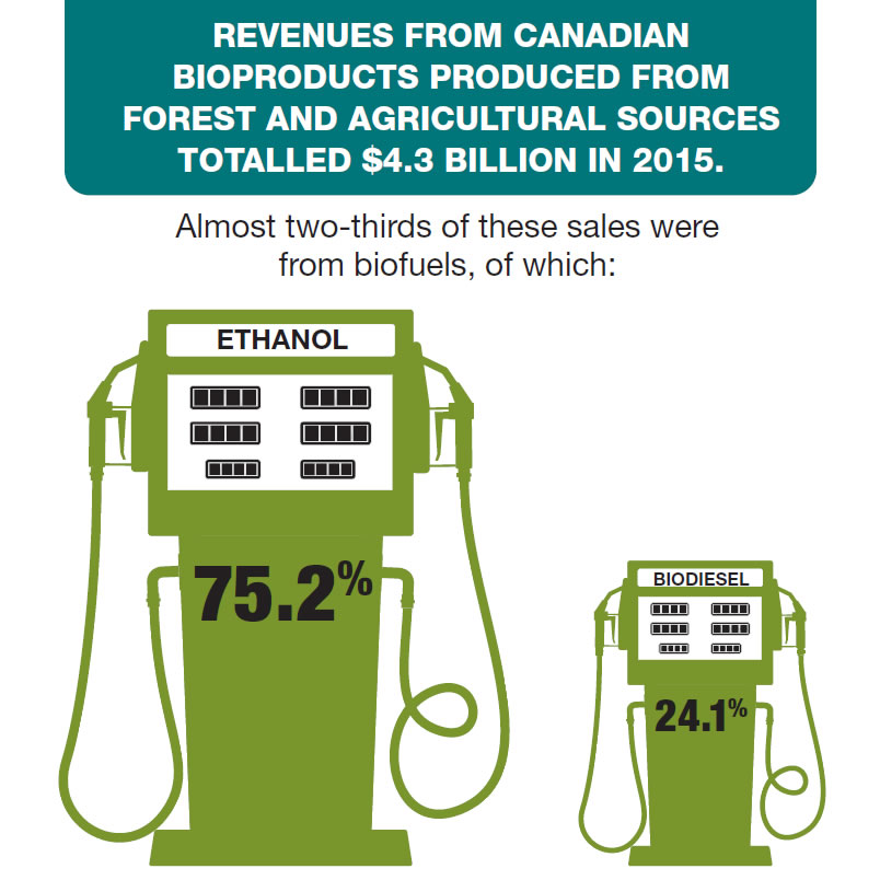 Infographic of two gas pumps with the text that revenues from Canadian bioproducts produced from forest and agricultural sources totaled $4.3 billion in 2015. Almost two-thirds of these sales were from biofuels, of which (1) 75.2% were from ethanol, (2) 24.1% were from biodiesel.