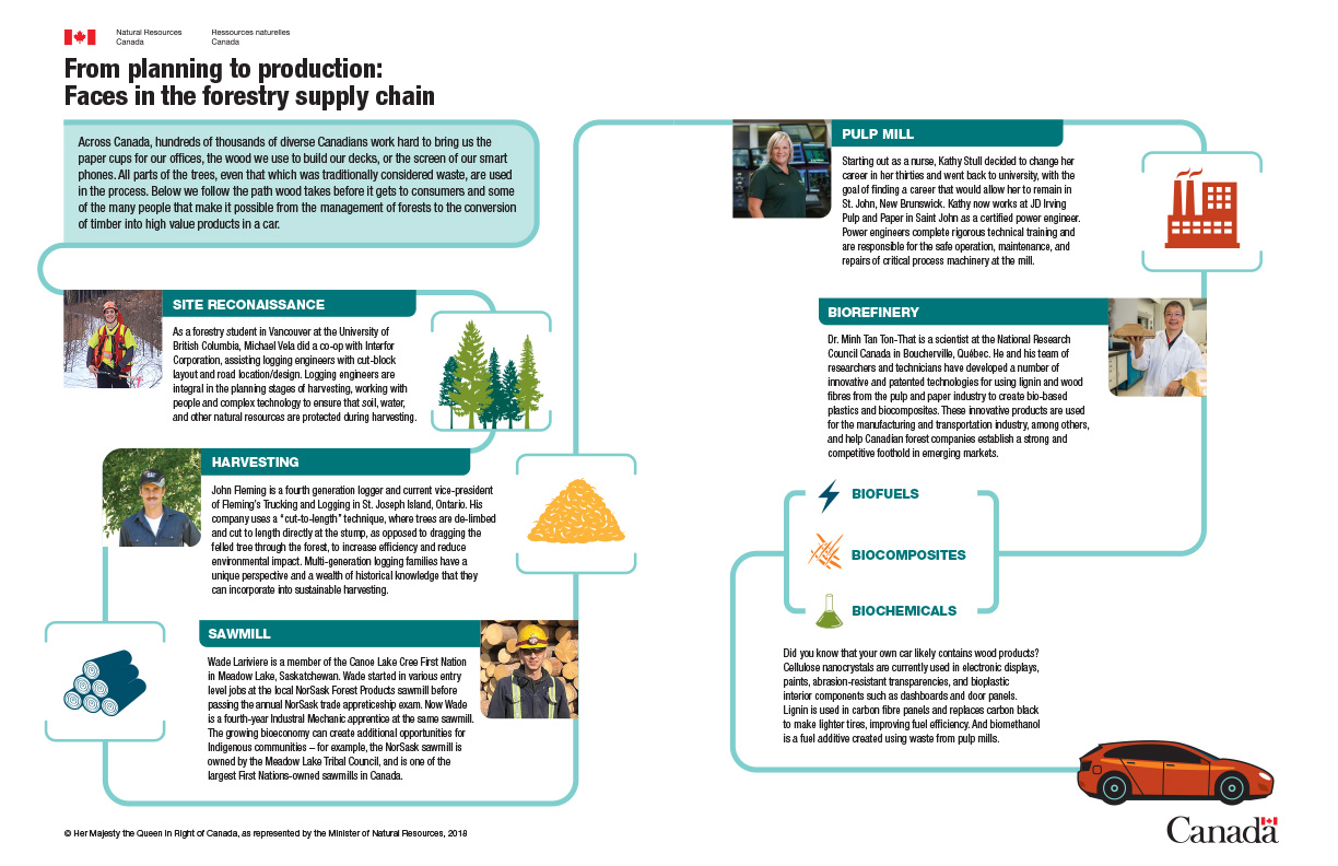 Infographic: From planning to production: faces in the forestry supply chain.