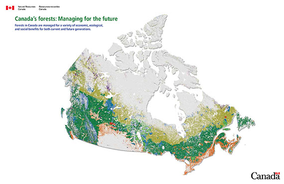 Small-scale map showing Canada's forest areas in nine ownership / tenure categories.