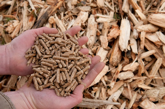 Hands holding wood pellets with wood chips in background.