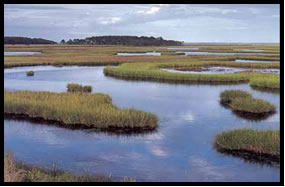 Water and marsh land