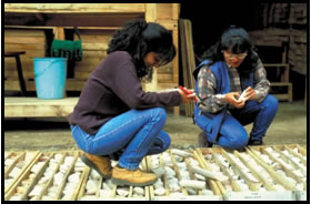 Two women looking at a collection of drill-core samples